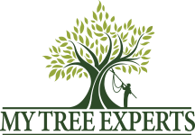 My Tree Experts